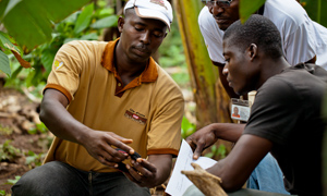 Cocoa worker in CÙte d'Ivoire